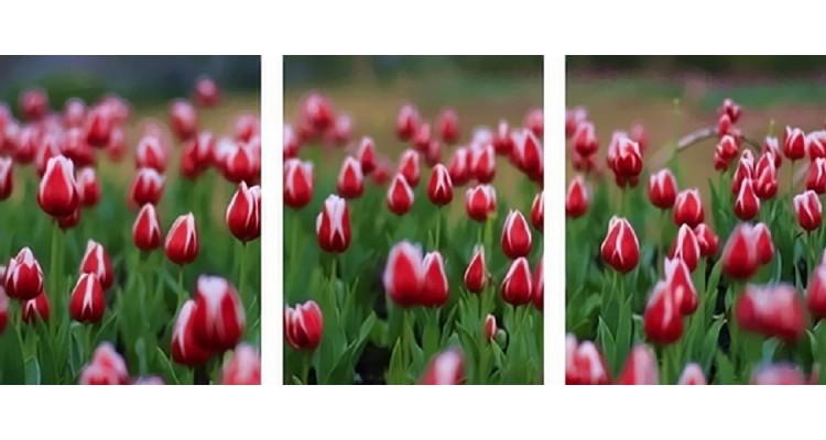 Где в твери купить зеленые тюльпаны доставка цветов по россии флора